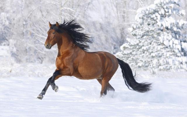 Под Киевом охотник застрелил племенного коня