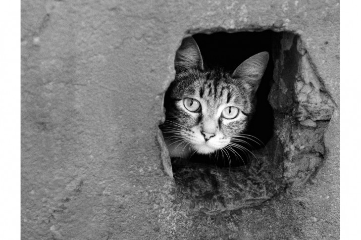 ВКиеве официально запретили вылов бездомных котов