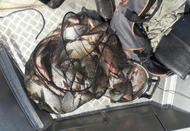 За сутки на Киевщине задержали 24 нелегальных рыбака