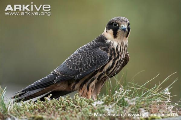 Столичные депутаты озаботились охраной гнезд редких птиц