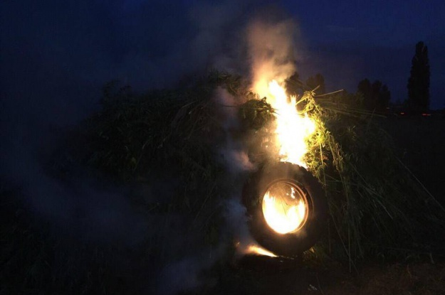 На Киевщине полицейские уничтожили 32 тысячи кустов конопли (фото)