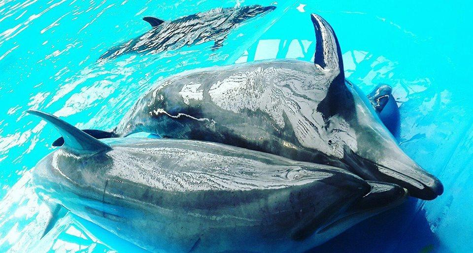 Дельфинарий «Немо» закрылся вКиеве