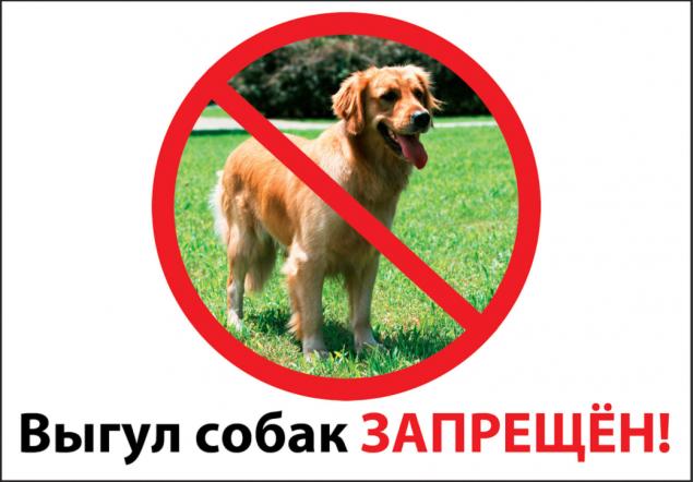 ВКиеве запретили выгуливать собак икотов около школ, детсадов и клиник