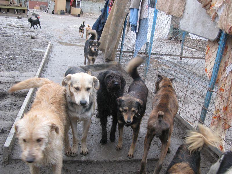 ВКиеве создадут центр защиты животных