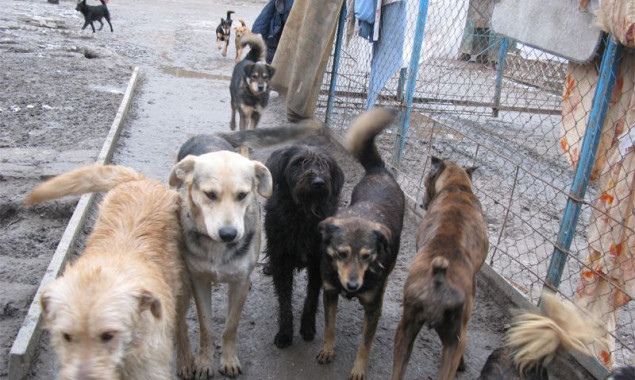 В Киеве стало меньше бездомных собак