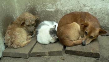 Власти Киева скрывают данные о регуляции численности бездомных животных в столице