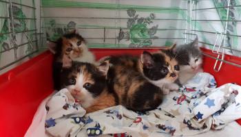 """Особенные коты из """"Сириуса"""" готовы принести в ваш дом счастье"""