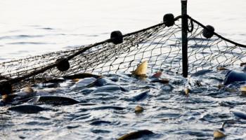За последние 2,5 года Киевский рыбоохранный патруль зафиксировал почти 3 тысячи грубых нарушений