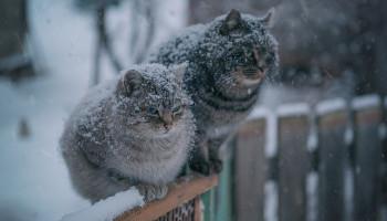 Погода в Киеве и Киевской области: 14 ноября 2018