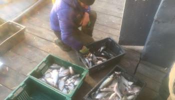 На Киевщине промысловик незаконно выловил рыбы почти на 130 тысяч гривен