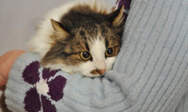"""Милые и изящные кошки из """"Сириуса"""" ищут надежного хозяина"""