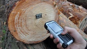 До конца октября лесхозы Киевщины перейдут на новую систему учета леса