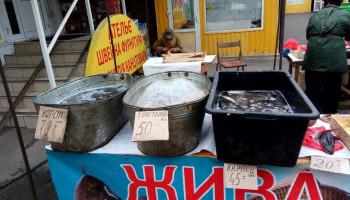 Киевский рыбоохранный патруль отчитался об изъятии более 300 кг рыбы на столичных рынках (фото)