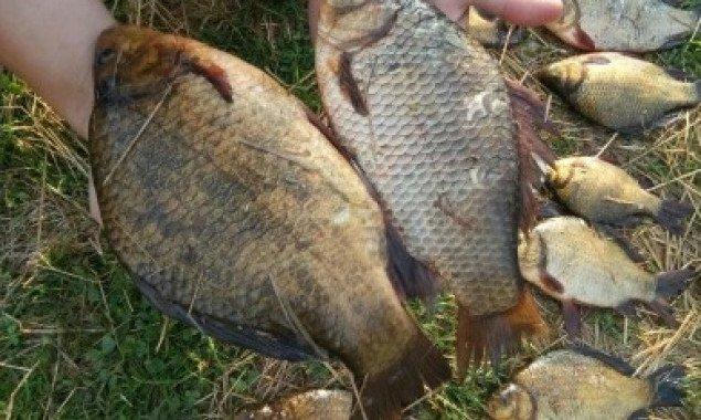 За вылов краснокнижной рыбы житель Киевщины поплатился штрафом