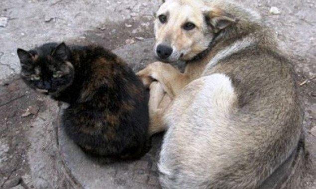 От столичных властей потребовали принять целевую программу по контролю за животными