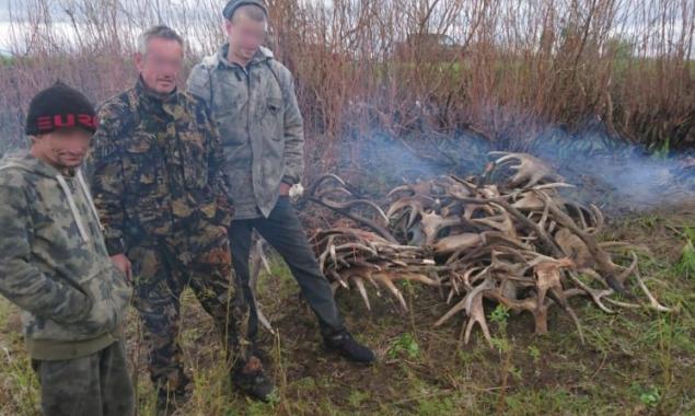 Полиция Киевщины задержала мужчин при попытке вывезти рога лосей из зоны отчуждения
