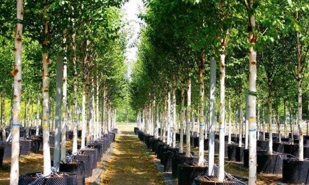 Кличко пересмотрел стоимость саженцев кустов и деревьев в Киеве