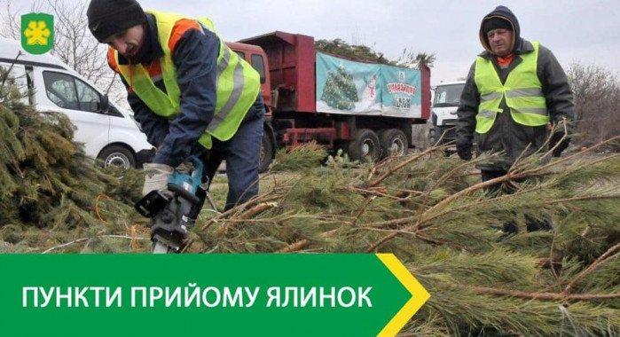 Пункты приёма новогодних елок открываются в Буче Киевской области