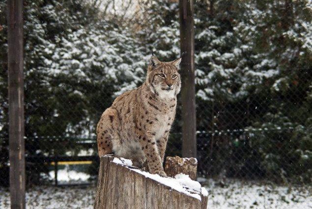 Киевский зоопарк ввел льготные цены на время локдауна
