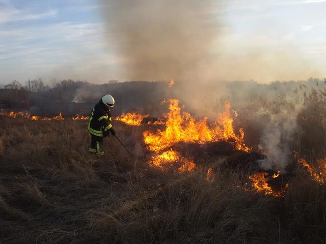 Картинки по запросу пожар листвы